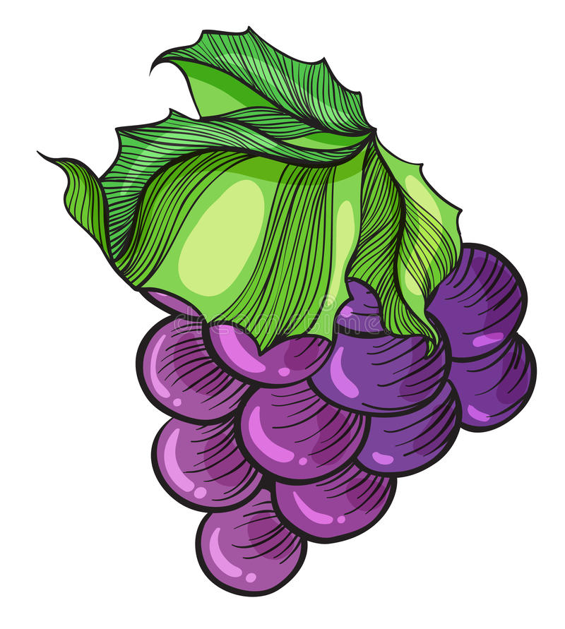 A luscious grape vector illustration