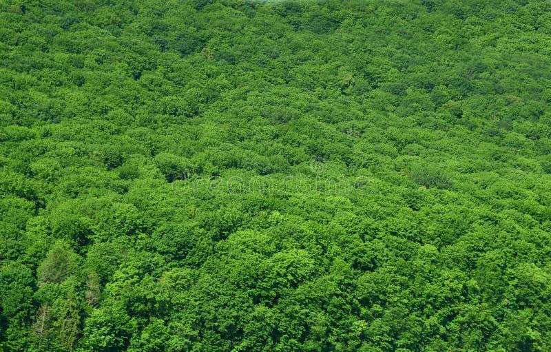 luscious regn för bakgrundsskog arkivfoton