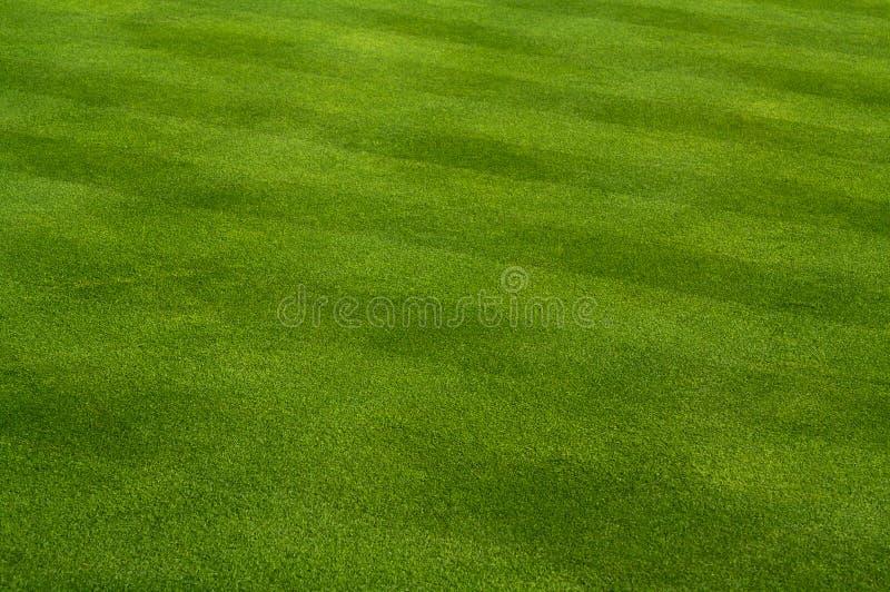 lush зеленого цвета травы стоковое изображение rf