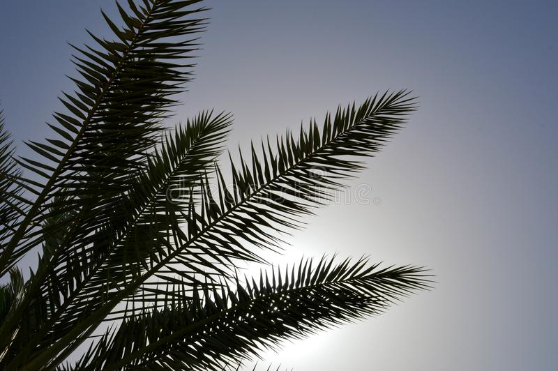 Lush beautiful green high tropical southern palm trees with long and lush branches and leaves against the backdrop of the evening stock images