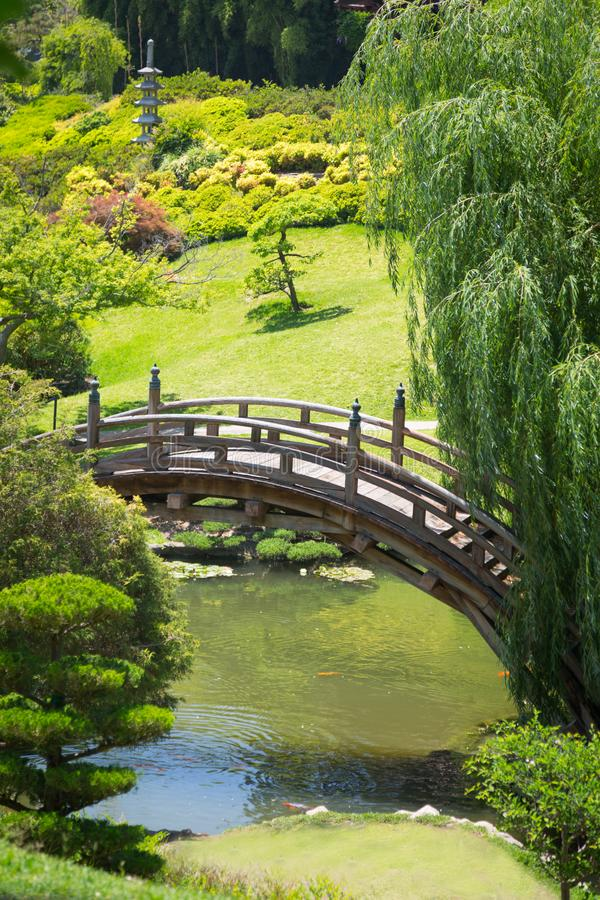 Lush Beautiful Japanese Garden with Pond and Bridge. stock photo