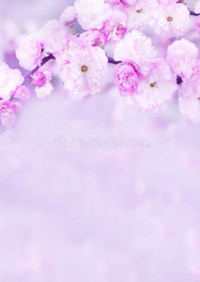 The lush bloom of pink  flowers in the garden. Artistic tender photo. royalty free stock photo