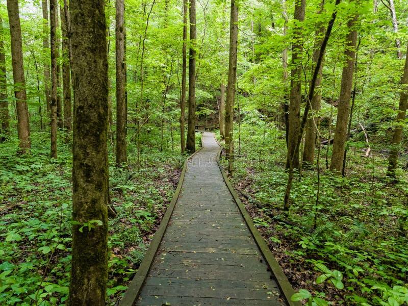 Lush Boardwalk. A boardwalk winds through a lush forest in northern Georgia royalty free stock photos