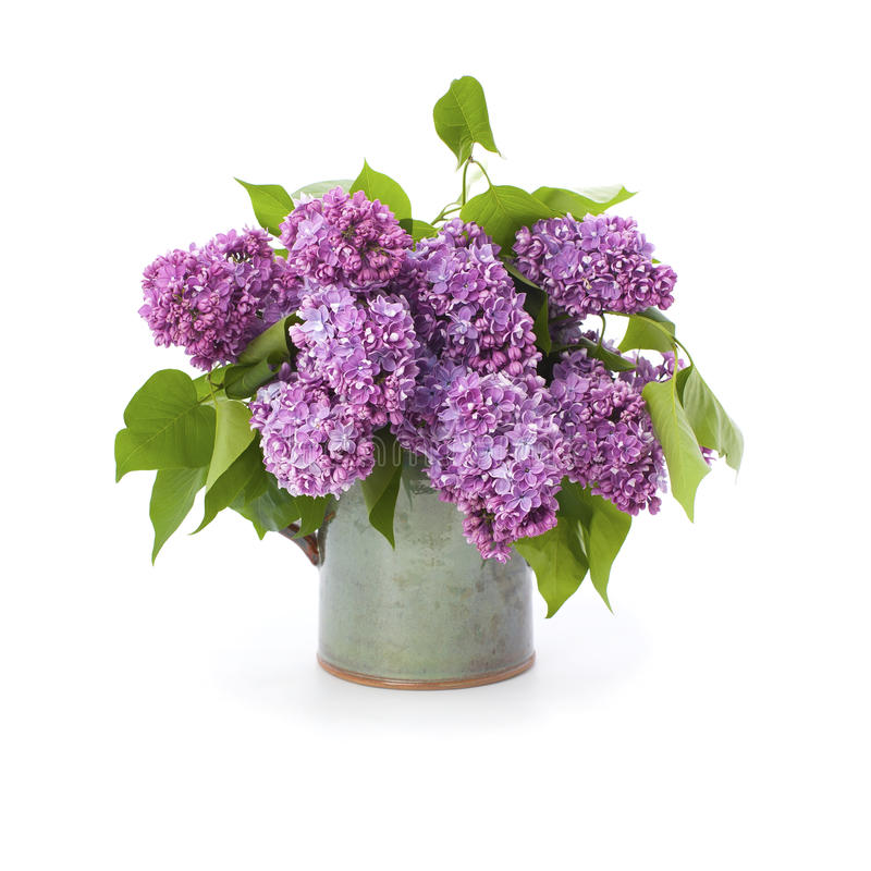 The lush bouquet of lilac in a ceramic vase. stock photo
