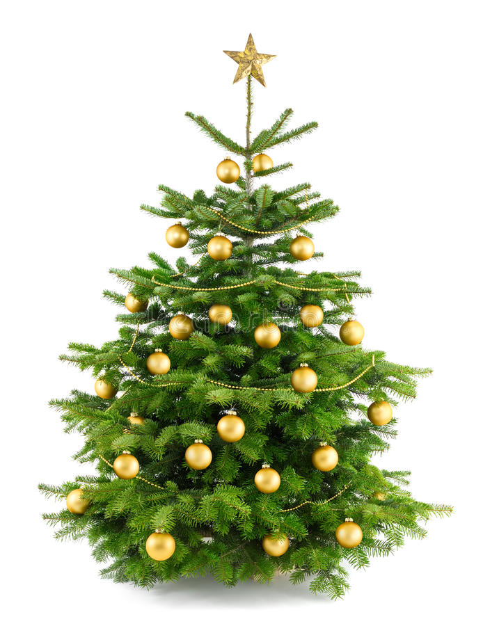 Lush christmas tree with gold ornaments royalty free stock photos
