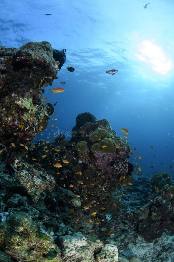 Lush Coral Reef under Bright Sun Light royalty free stock photos