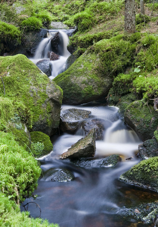 Download A lush creek stock image. Image of green, park, forest - 42435511