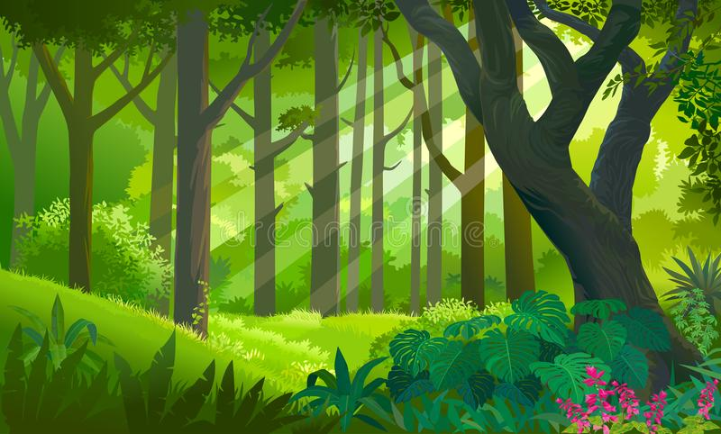 Lush dense green forest with sun rays touching the plants and trees vector illustration