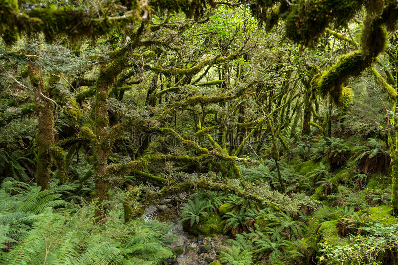 Lush forest along the Kepler Track. One of the New Zealand Great Walks royalty free stock photography
