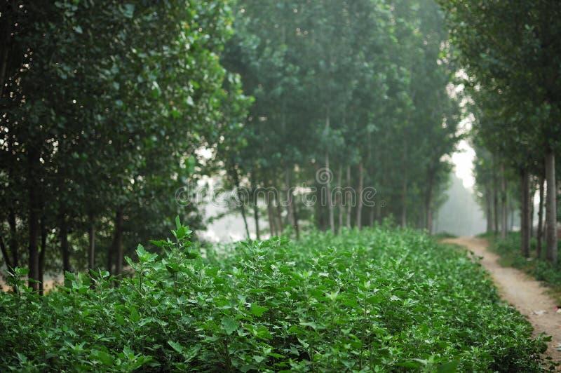 Download Lush grass stock image. Image of road, green, poplar - 14887215
