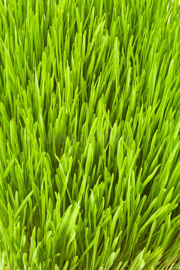 Lush Grass Stock Photo