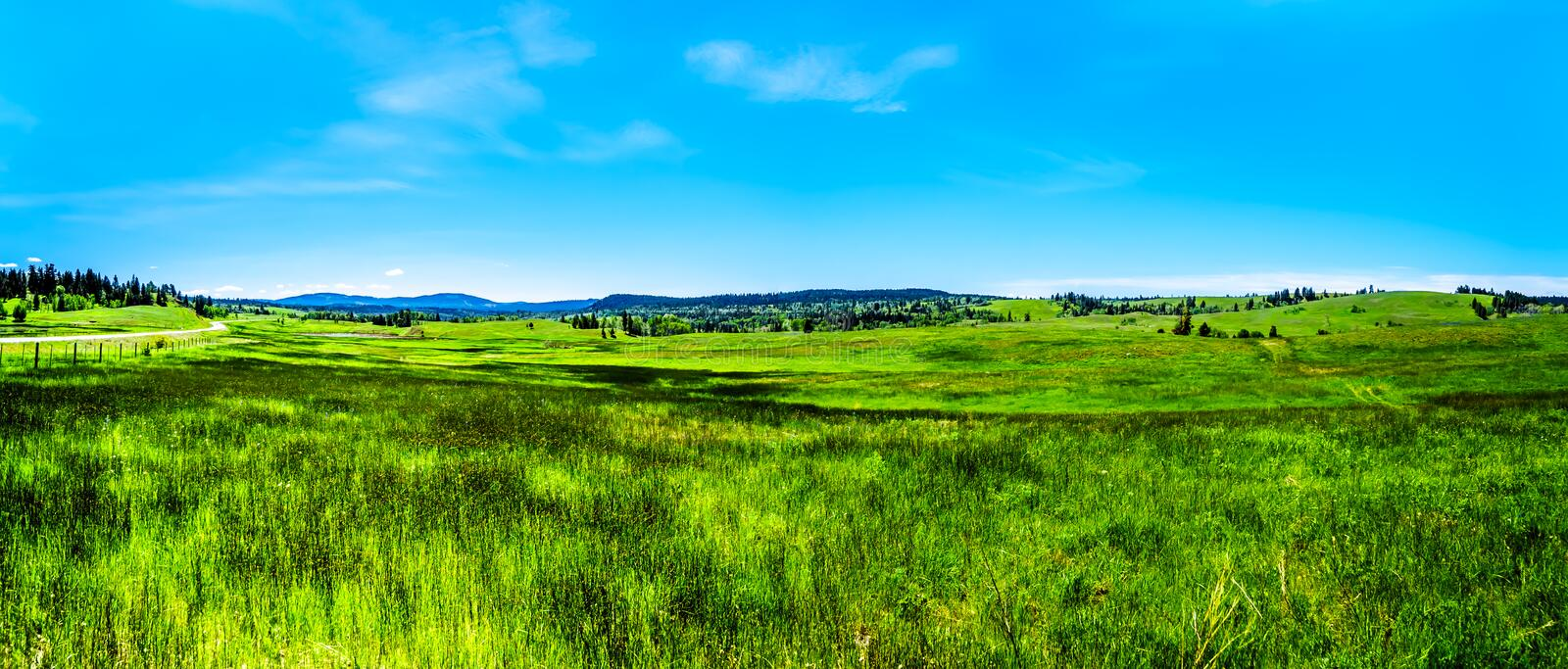 Grasslands alongthe Kamloops Princeton Highway in British Columbia,. Lush Grasslands along Highway 5A, the Kamloops-Princeton Highway, between the towns of royalty free stock images