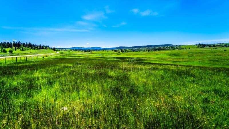 Grasslands alongthe Kamloops Princeton Highway in British Columbia,. Lush Grasslands along Highway 5A, the Kamloops-Princeton Highway, between the towns of royalty free stock image