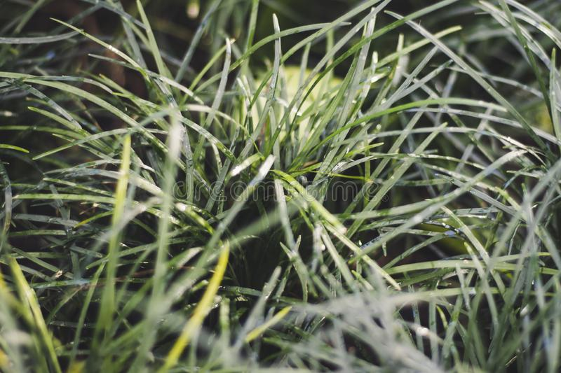 Lush green blades of grass background royalty free stock images
