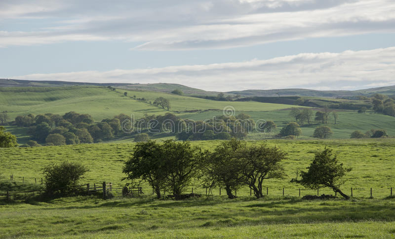 Download Lush Green English Countryside With Rolling Hills Stock Image - Image of farmland, topography: 55375085