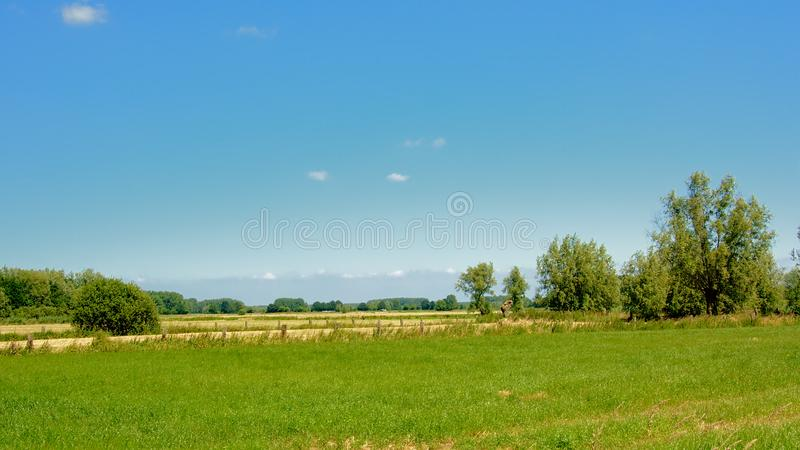 Lush green field with trees under a clear blue sky in Kalkense Meersen nature reserve, Flanders, Belgium. Part of the Sigmaplan which protects Flanders from stock photos