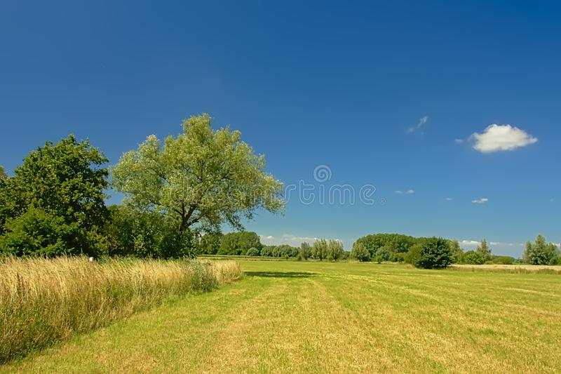 Lush green fields with trees under a clear blue sky in Kalkense Meersen nature reserve, Flanders, Belgium. Lush green fields with trees under a clear blue sky stock image