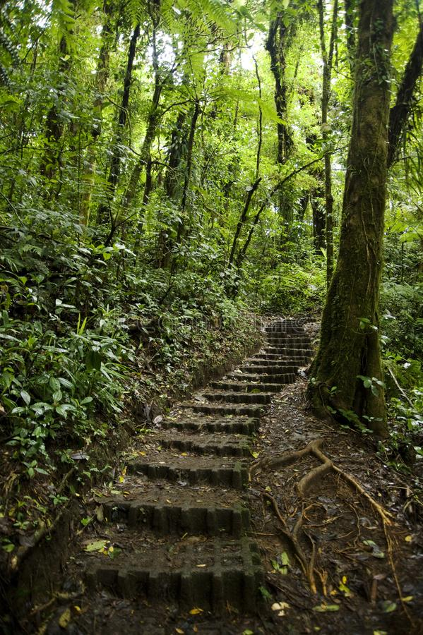 Lush, green foliage surrounds the numerous hiking trails in Monteverde Cloud Forest Reserve. The Monteverde Cloud Forest Reserve was established in 1972 and stock photography