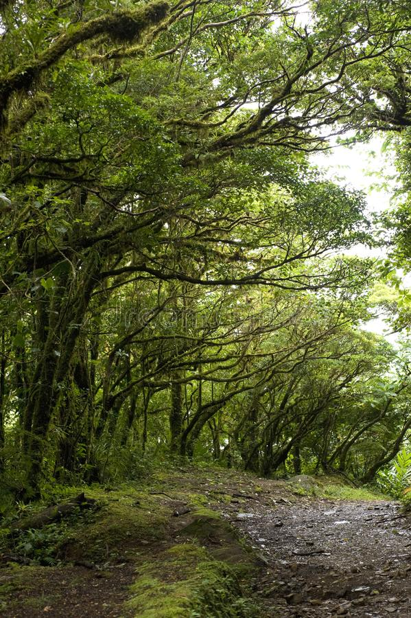 Lush, green foliage surrounds the numerous hiking trails in Monteverde Cloud Forest Reserve in Costa Rica. The Monteverde Cloud Forest Reserve was established stock photo