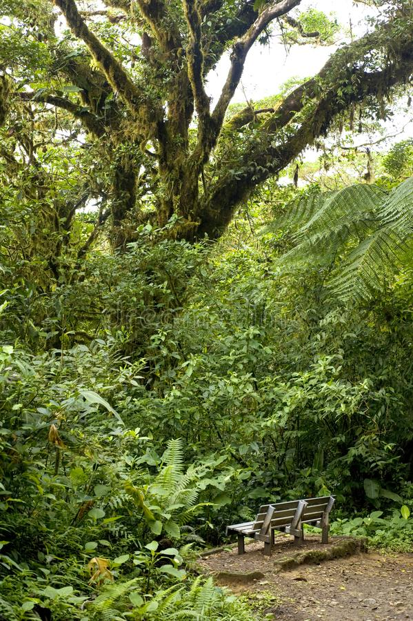 A lone bench sits among the lush, green foliage of Monteverde Cloud Forest Reserve in Costa Rica. The Monteverde Cloud Forest Reserve was established in 1972 royalty free stock images