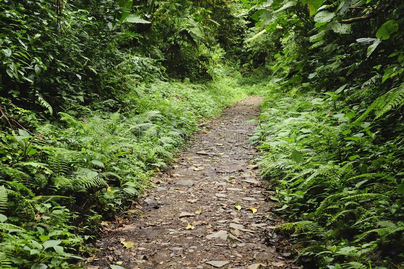 Lush, green foliage surrounds the numerous hiking trails in Monteverde Cloud Forest in Costa Rica. The Monteverde Cloud Forest Reserve was established in 1972 stock photos