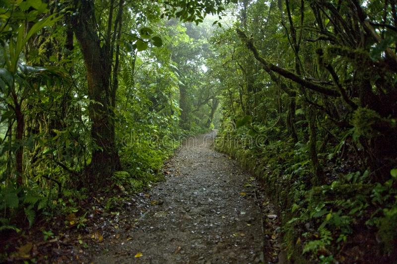 Lush, green foliage surrounds the numerous hiking trails in Monteverde Cloud Forest in Costa Rica. The Monteverde Cloud Forest Reserve was established in 1972 stock images