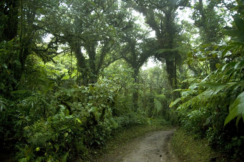 Lush, green foliage surrounds the numerous hiking trails in Monteverde Cloud Forest in Costa Rica. The Monteverde Cloud Forest Reserve was established in 1972 stock photography
