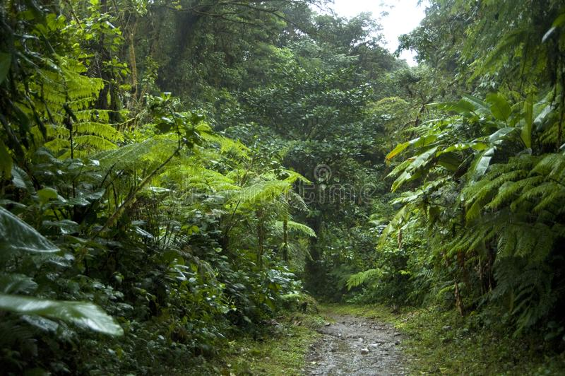 Lush, green foliage surrounds the numerous hiking trails in Monteverde Cloud Forest in Costa Rica. The Monteverde Cloud Forest Reserve was established in 1972 royalty free stock photos