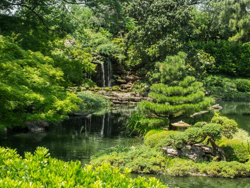 Lush green foliage Surrounds Pond Japanese Gardens Fort Worth Texas. Lush green foliage surrounds pond with waterfall at the stock images