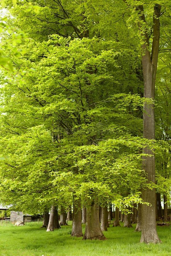 Lush Green Foliage stock photography