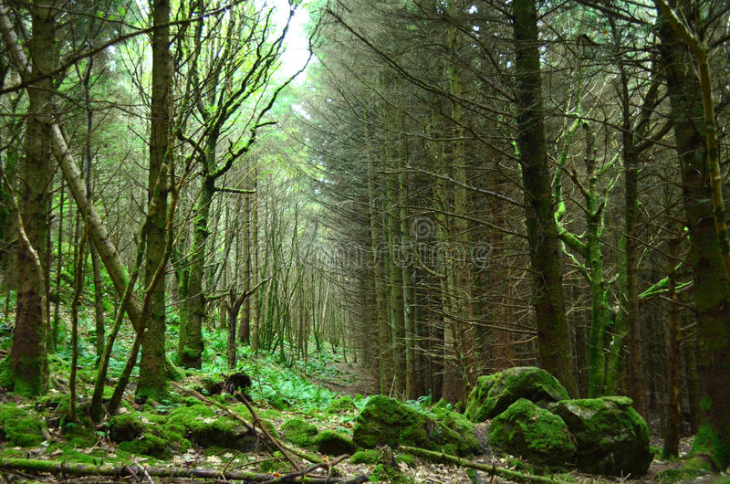 Lush Green Forest on the Highlands of Scotland stock photography