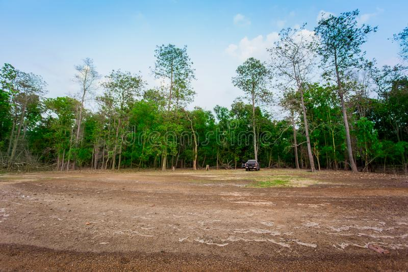 Oak Tree, Tree, Field, Cultivated Land, Forest stock photo