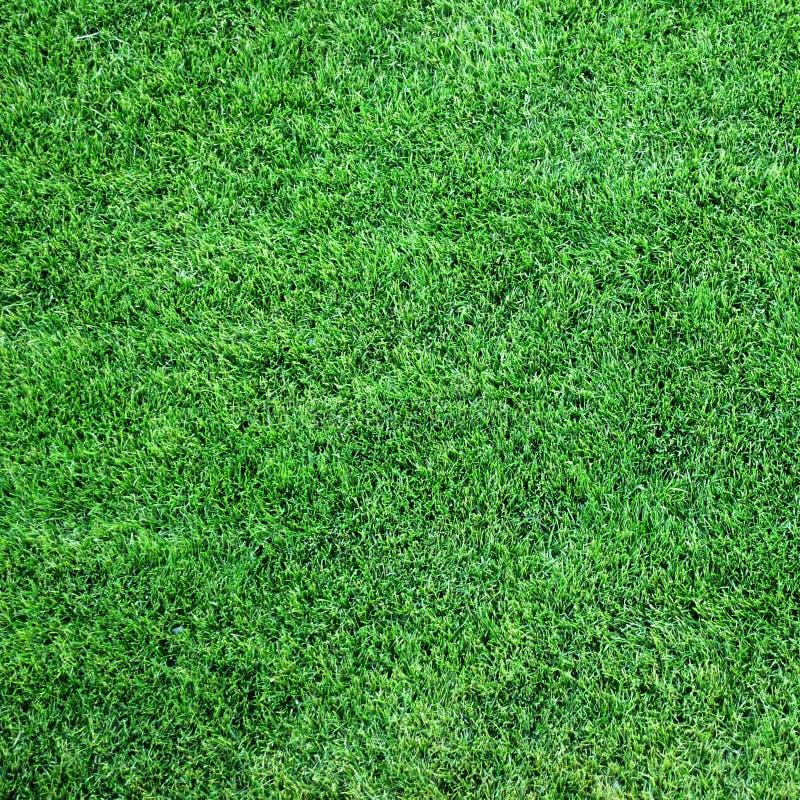 Lush green grass stock image