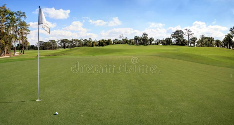 Lush green grass on a golf course royalty free stock image