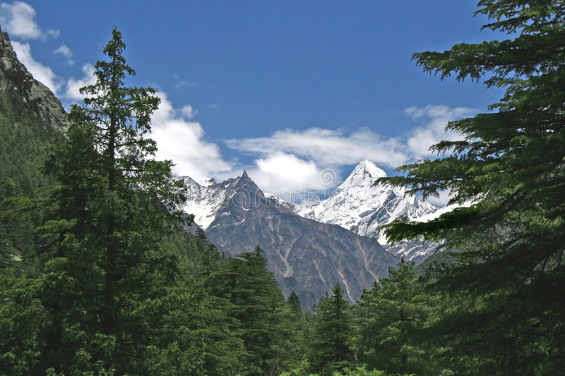 Lush green himalayan forest and snow peaked valley India. Peeping snow peaks though lush green himalayan forest near Gangotri town in uttarancha state of l india royalty free stock photography