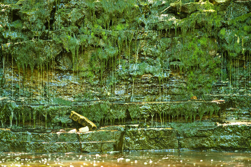 Download Lush Green Jungle And Water Stock Photo - Image: 19911974