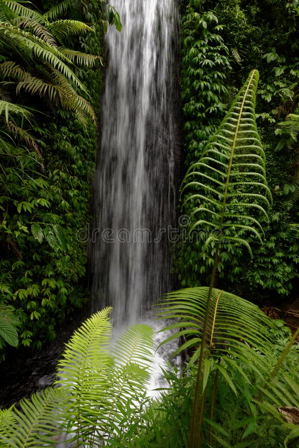 Waterfall, Bali, Indonesia. Lush green leaves with moss and ferns against a motion blurred waterfall on a small stream in Balinese jungle. Bali, Indonesia stock photos