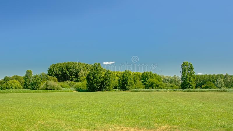 Lush green meadow with trees under a clear blue sky in Kalkense Meersen nature reserve, Flanders, Belgium. Part of the Sigmaplan which protects Flanders from stock image