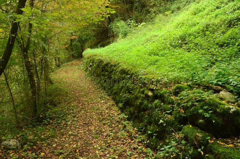 Lush green moss covering a ancient rock wall royalty free stock photography