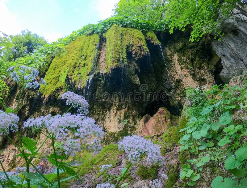 Lush green moss at Pietrele Vorbitoare waterfalls royalty free stock photo
