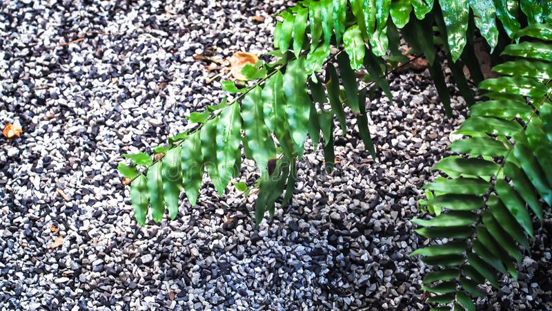 Lush green plant leaves and stone wall background stock images