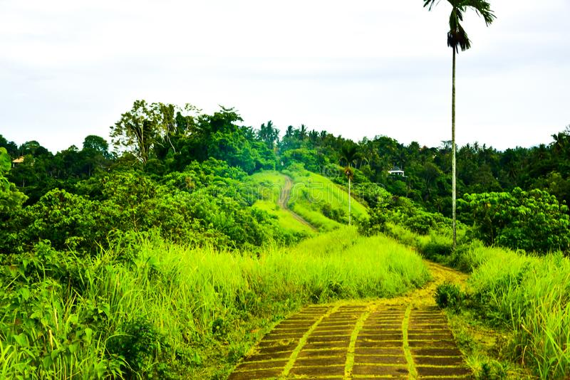 Lush green plantation walking track in the rain forest tropical jungle stock image