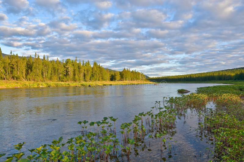 Lush green plants along the banks of the taiga river. The `virgin Komi forests` UNESCO world heritage site in the national Park `Yugyd VA royalty free stock photos