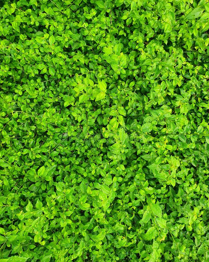 Lush green plants in the park royalty free stock photography