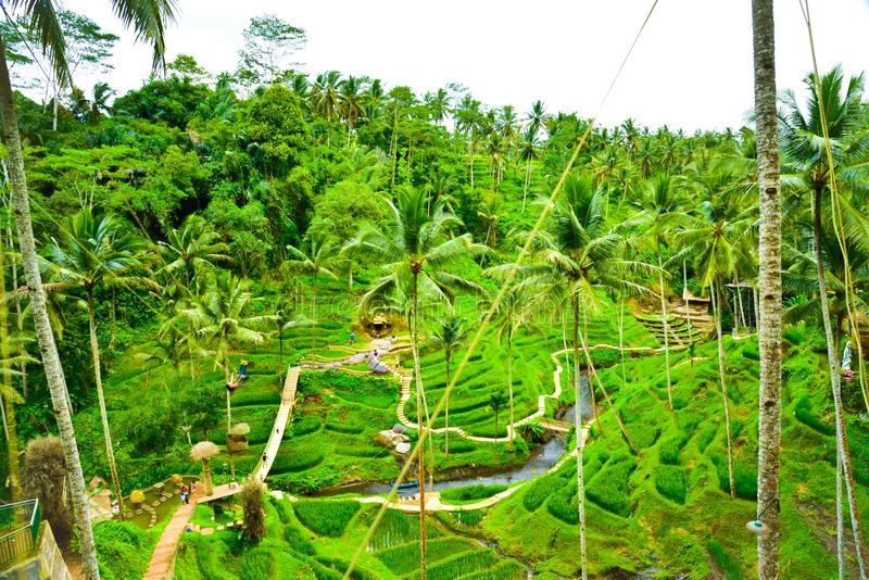 Lush green rice terrace field rain forest tropical jungle in South Eeast Asian morning sunrise stock image