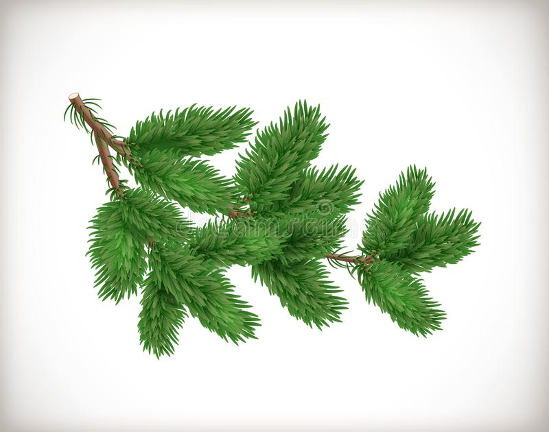 Lush green spruce or fir-tree branch isolated on white background. Object or element for Christmas and New Year design. Realistic stock illustration