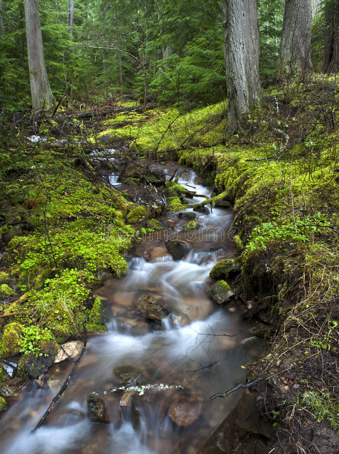 Lush green stream. royalty free stock photos