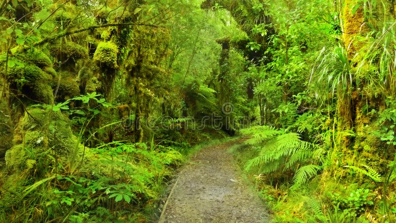 US National Parks, Olympic National Park, Washington. Lush green trees in rainforest in Olympic National Park, Washington. U.S. National Parks stock photos