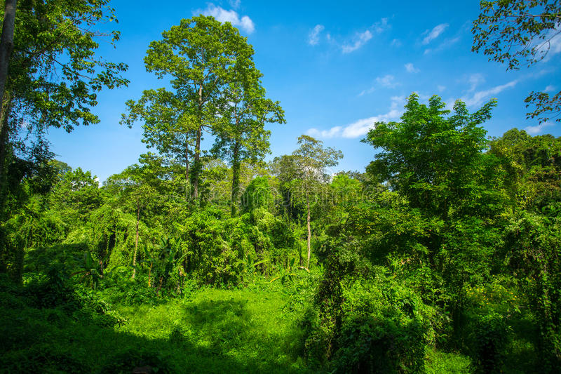 Lush green tropical forest. In Thailand stock images
