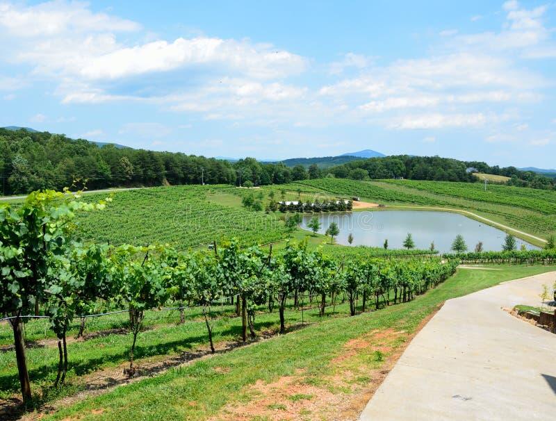 Download Lush green vineyard stock photo. Image of vineyard, scenic - 25256068